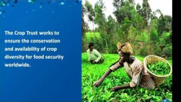 Domedagsvalvet del 3 - Global Crop Diversity Trust
