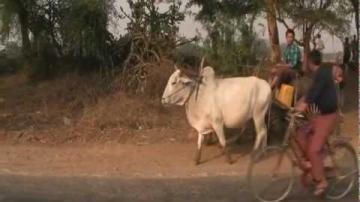 Resan till det gyllene landet Burma - Del 1