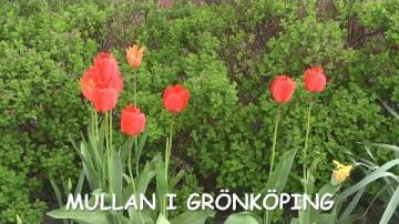Mullan i Grönköping